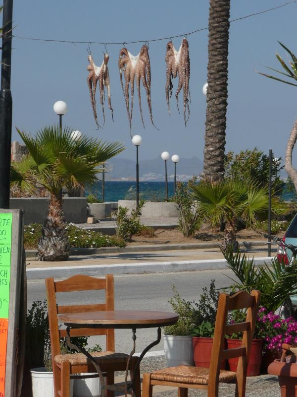 Frischer Oktopus wird im Hafen von Mastichári in der Sonne getrocknet